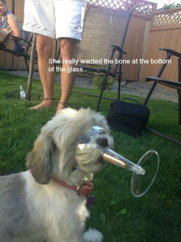 funny bone in a glass for a dog