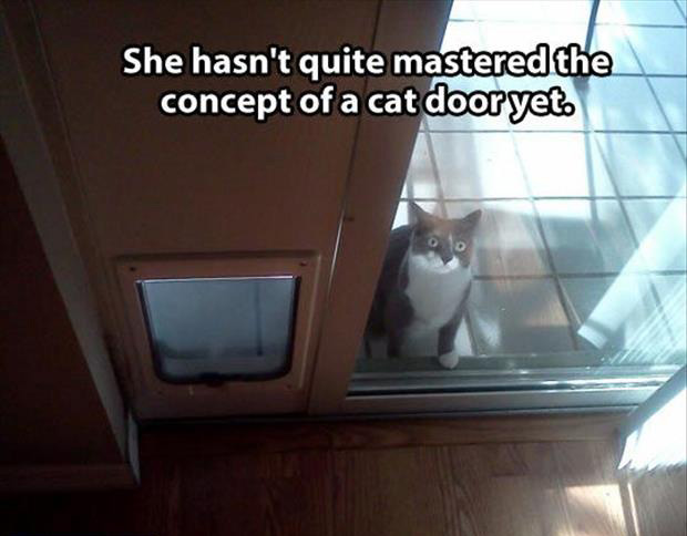 funny cat door