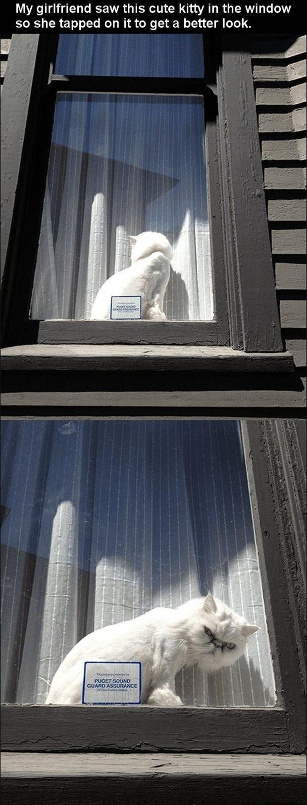 funny cat in the window