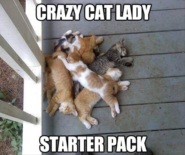 funny cat lady