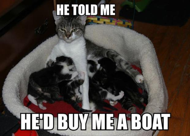 funny cat mommy
