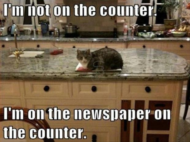 funny cat on the counter
