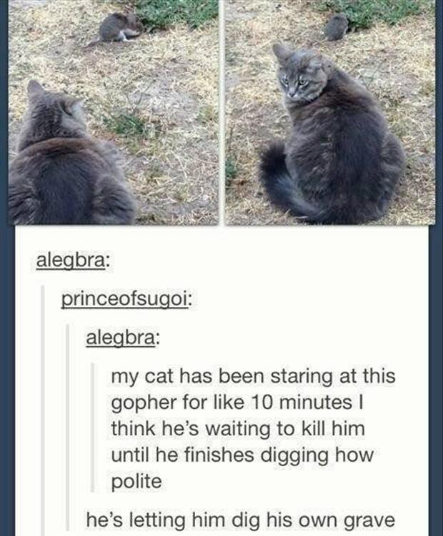 funny cat vs gopher