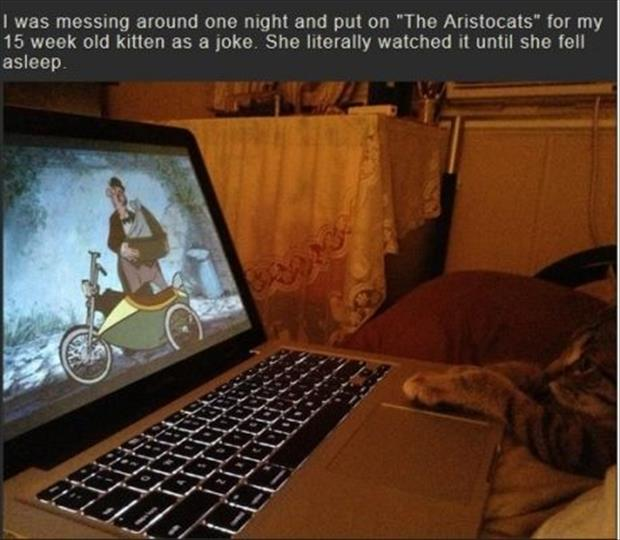 funny cat watching a movie