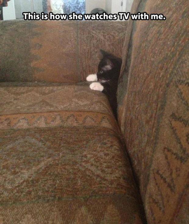 funny cat watching tv