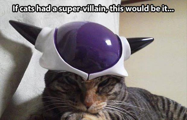 funny cats super villian