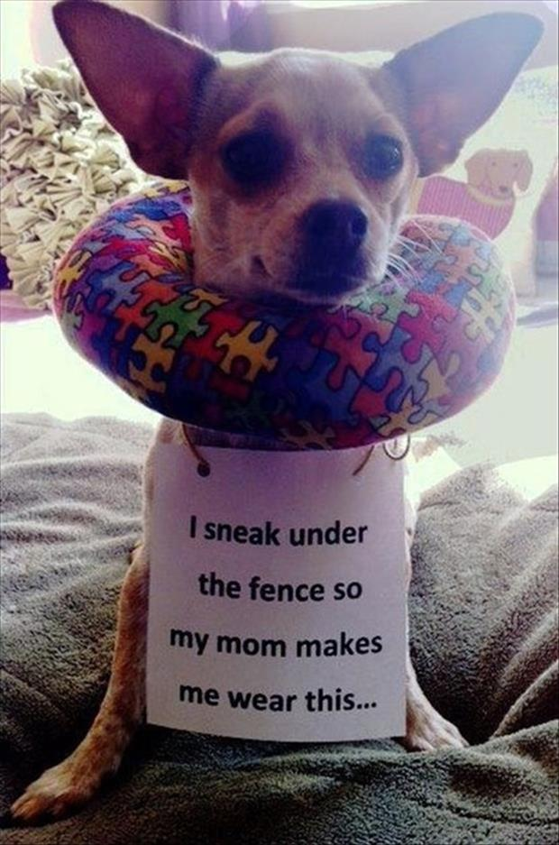 funny dog shaming ring