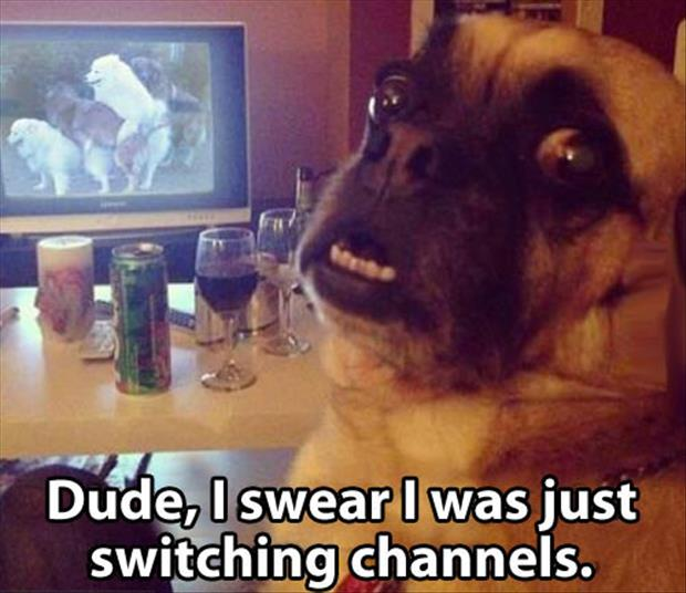funny dog watching doggy style