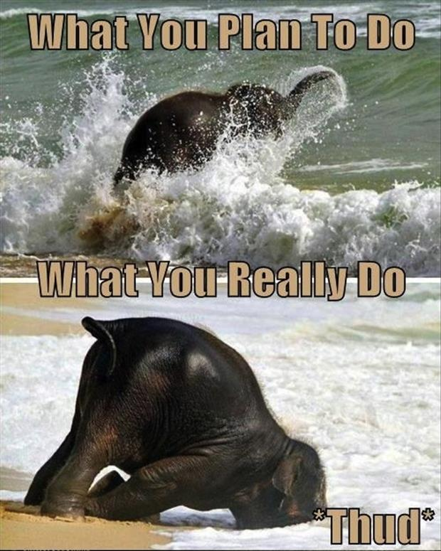funny elephant in the water