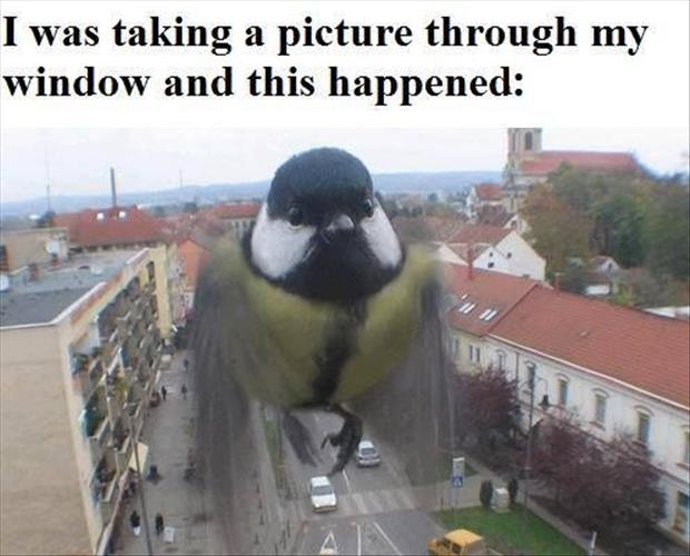 funny pictures of birds