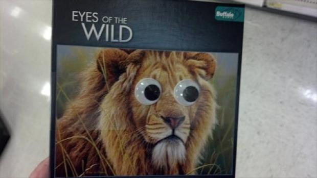 googly eyes funny pictures, dumpaday (12)