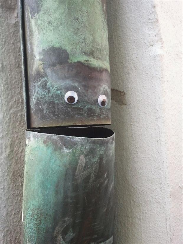 googly eyes funny pictures, dumpaday (14)