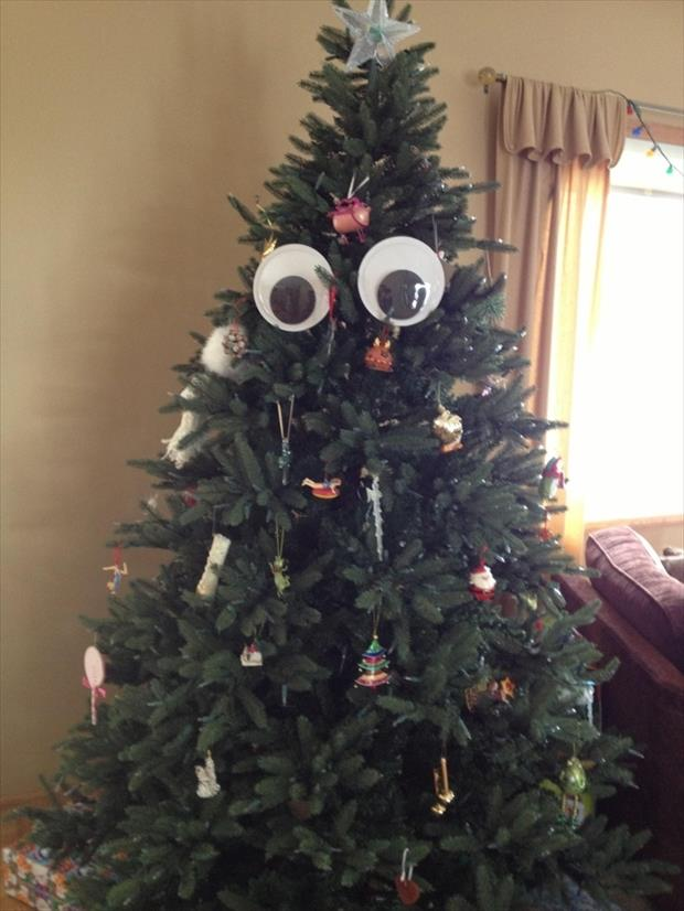 googly eyes funny pictures, dumpaday (27)