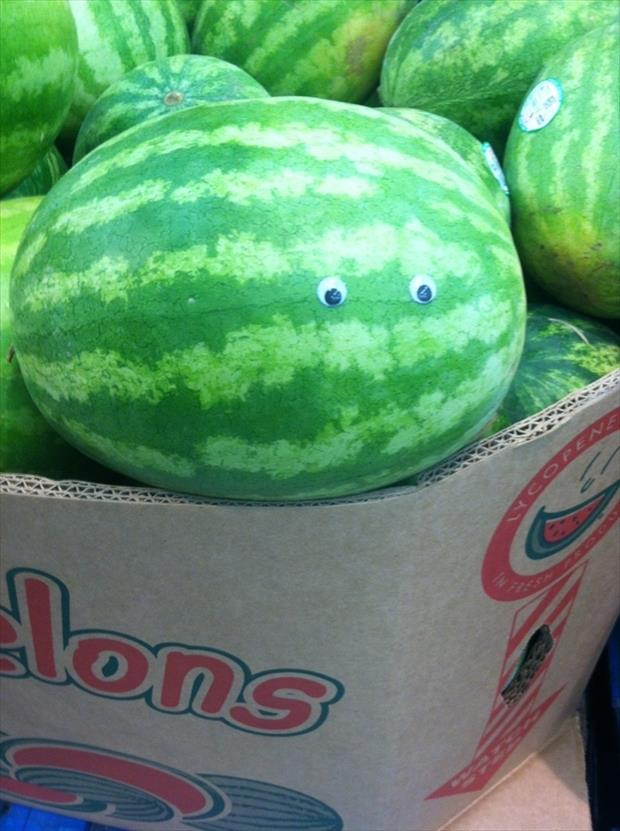 googly eyes funny pictures, dumpaday (9)
