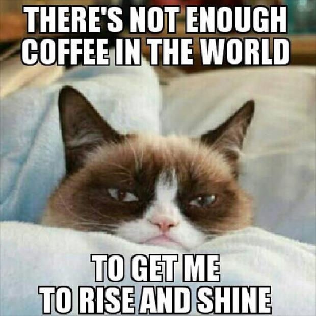 grumpy cat rise and shine