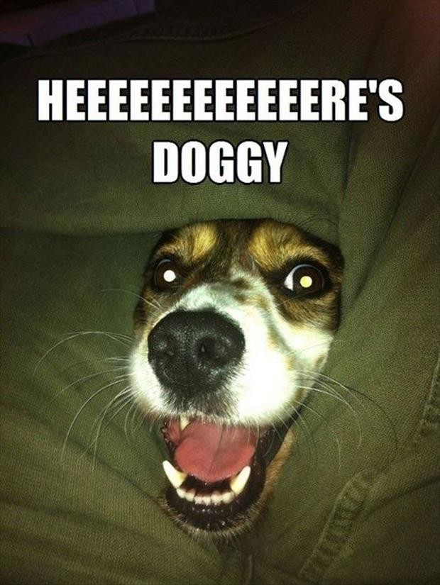 here's doggy