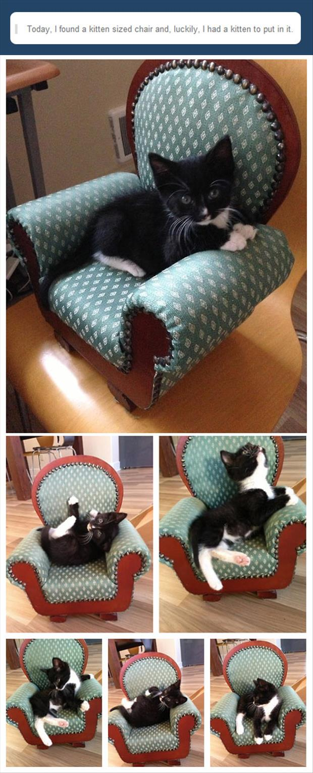 kitten chair with kitten
