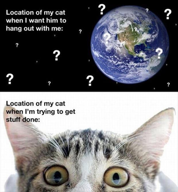 location of the cat