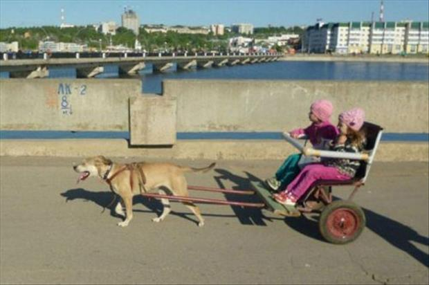 meanwhile in russia funny pictures, dumpaday (23)