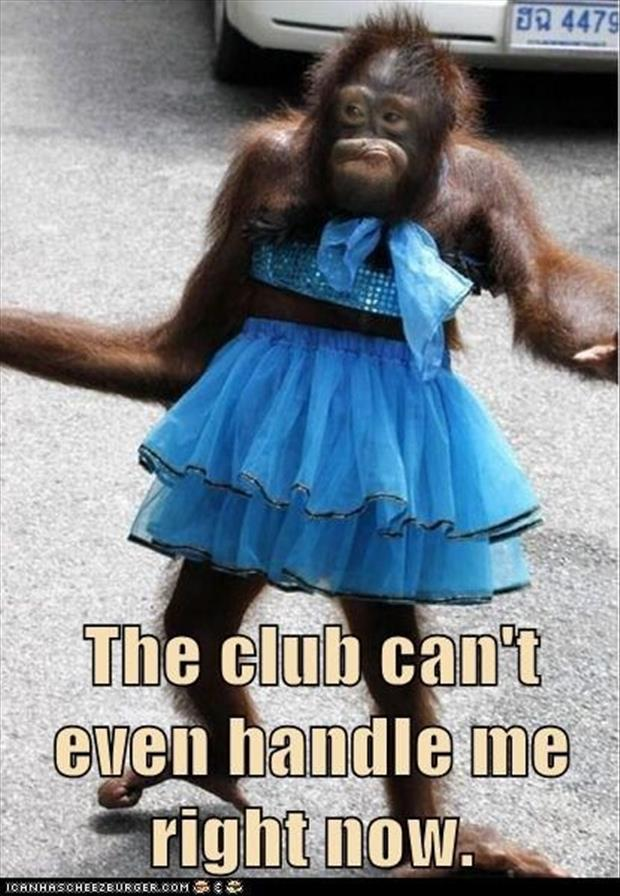 monkey in a dress