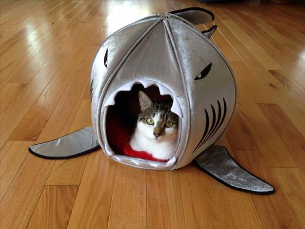 my cat is ready for shark week