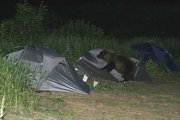 oh shit moments bear in our campsite