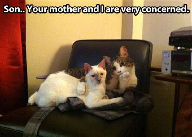 parent cats