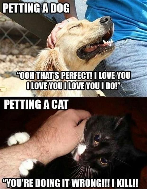 petting a dog vs petting a cat