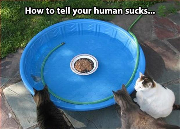 playing with your cats