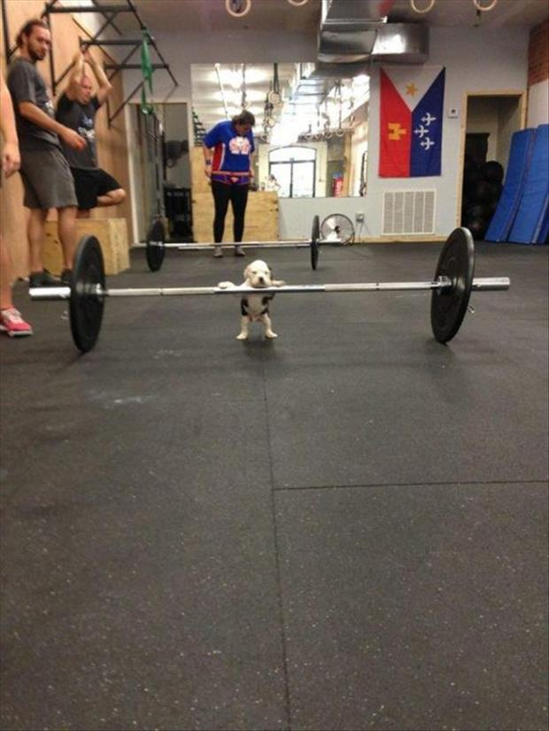 puppy working out