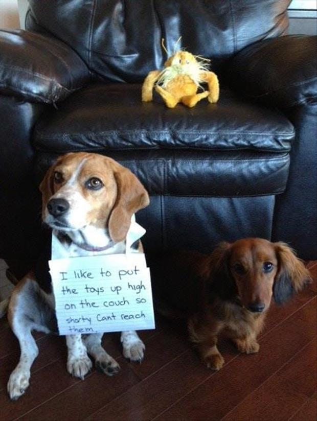 short dogs dog shaming