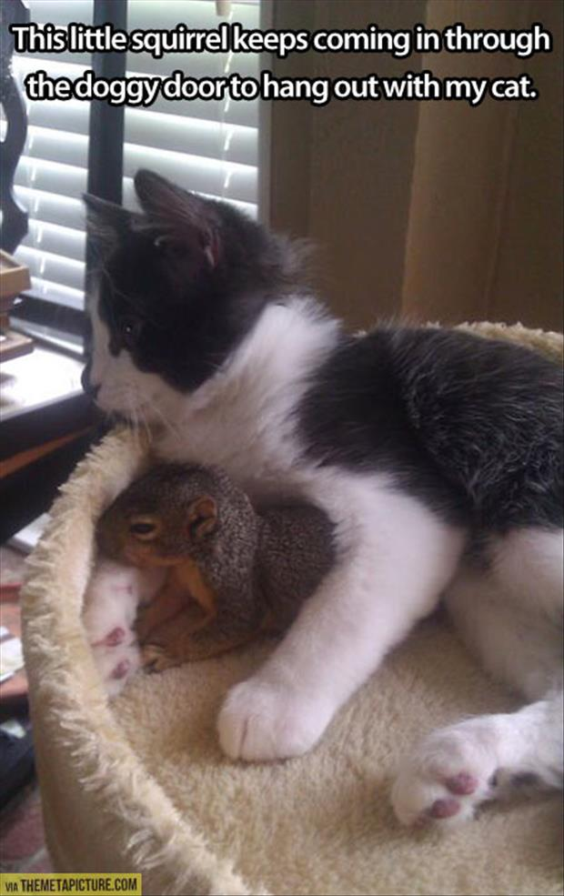 squirrel loves my cat