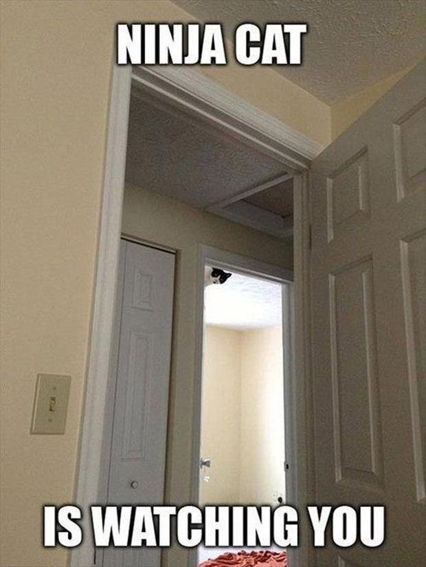 the cat is watching you
