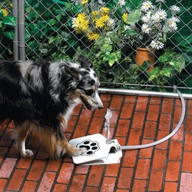 the dog drinking fountain