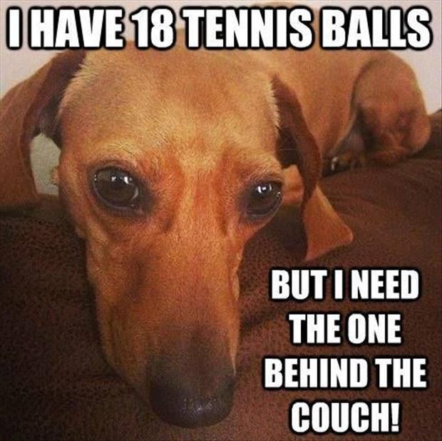 the dog wants the tennis ball