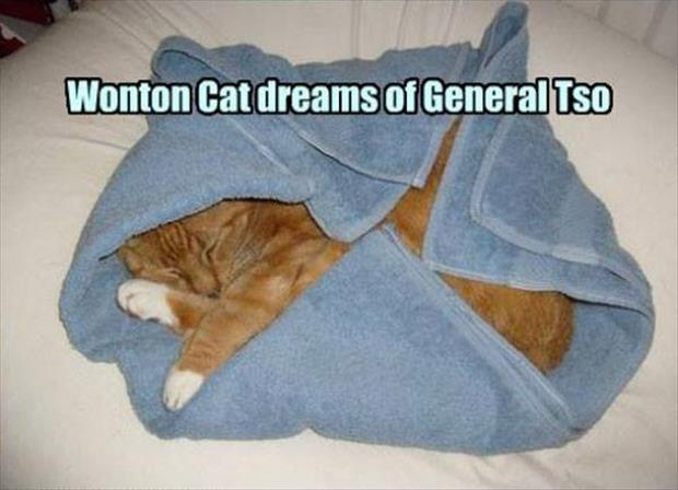 the funny cat dreams