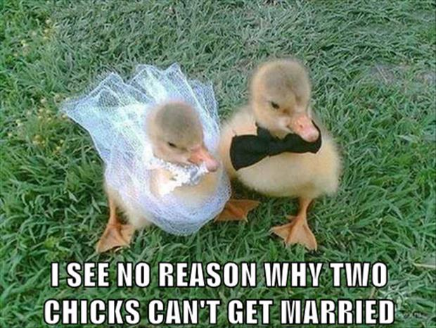two chicks getting married