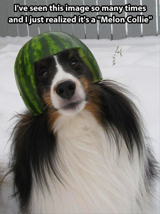 watermelon on a dog's head