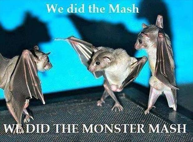 we did the mash we did the monster mash