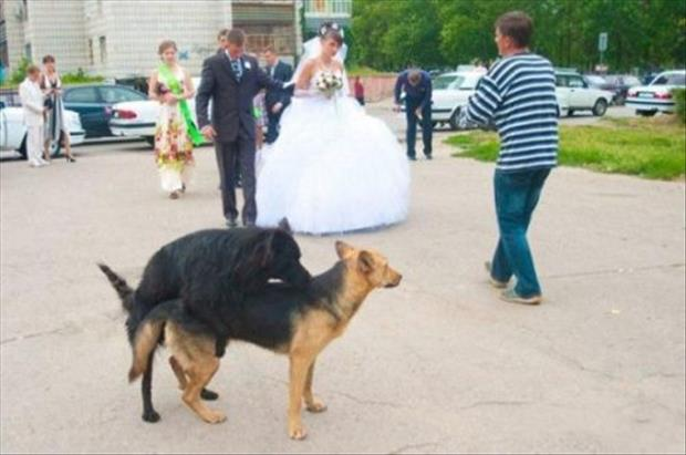 wedding funny pictures, dumpaday (18)