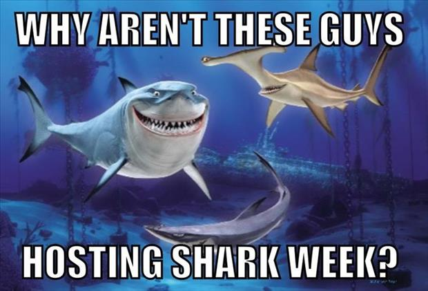 why aren't these guys hosting shark week