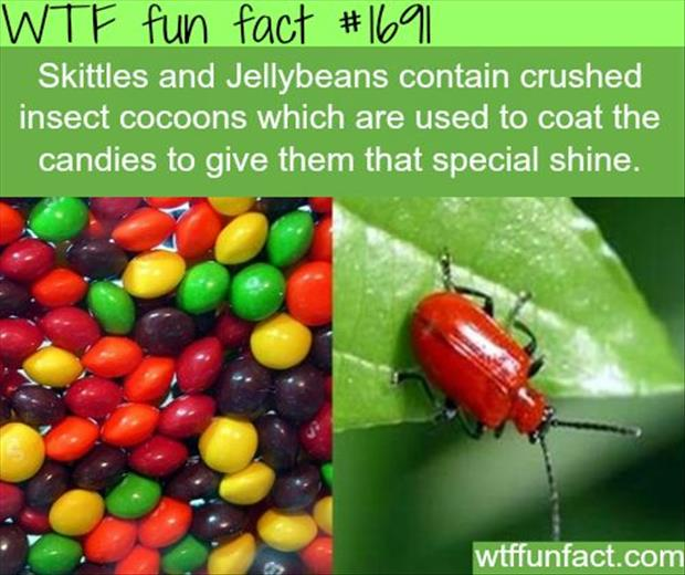 wtf facts 3