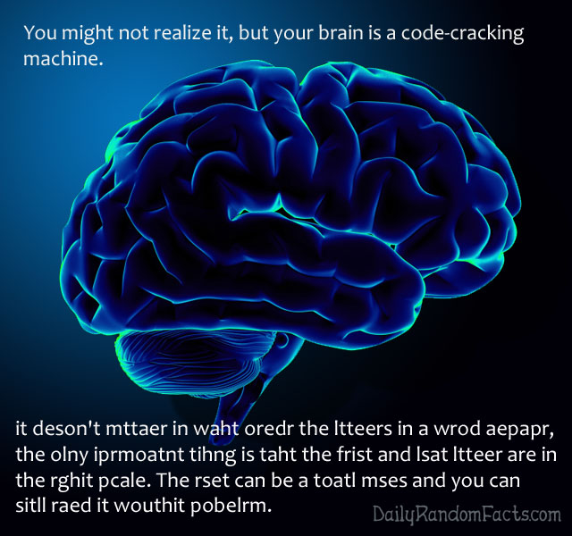 Brain Codebreaking Fact