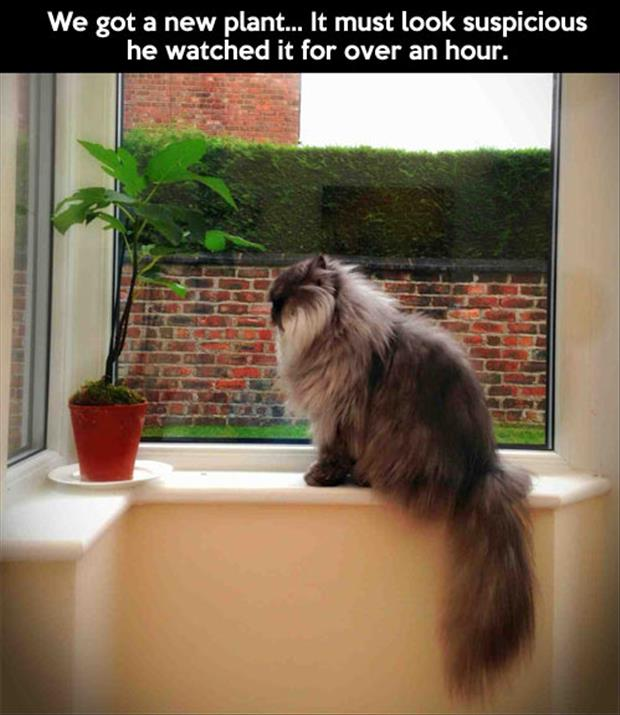 a cat watches new plant