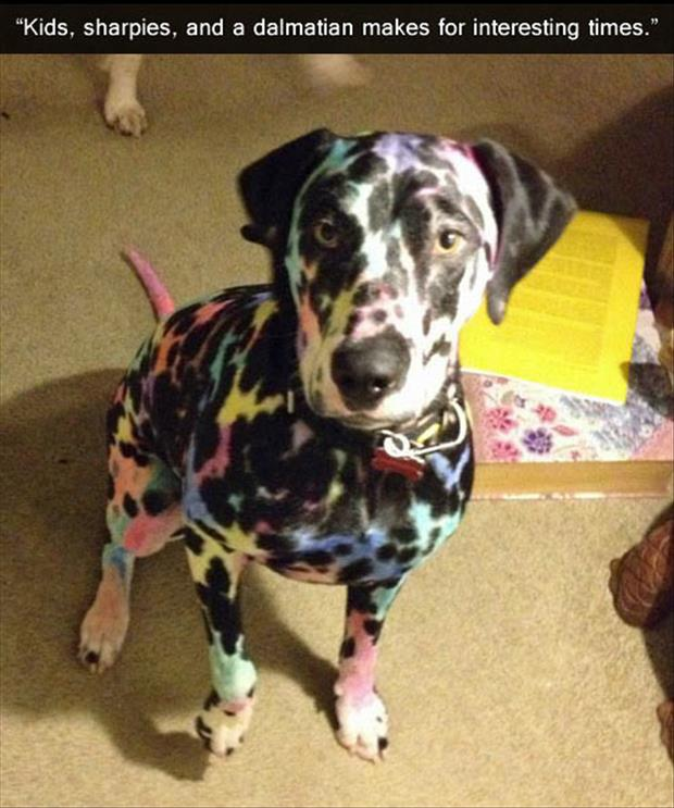 a kids color our dog