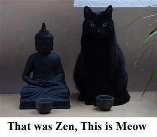 a zen and meow