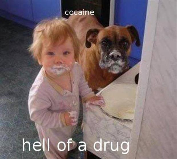 baby and dog on drugs