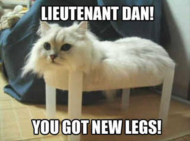 call your cat dan