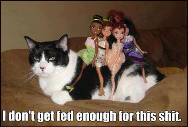 cat and barbie dolls