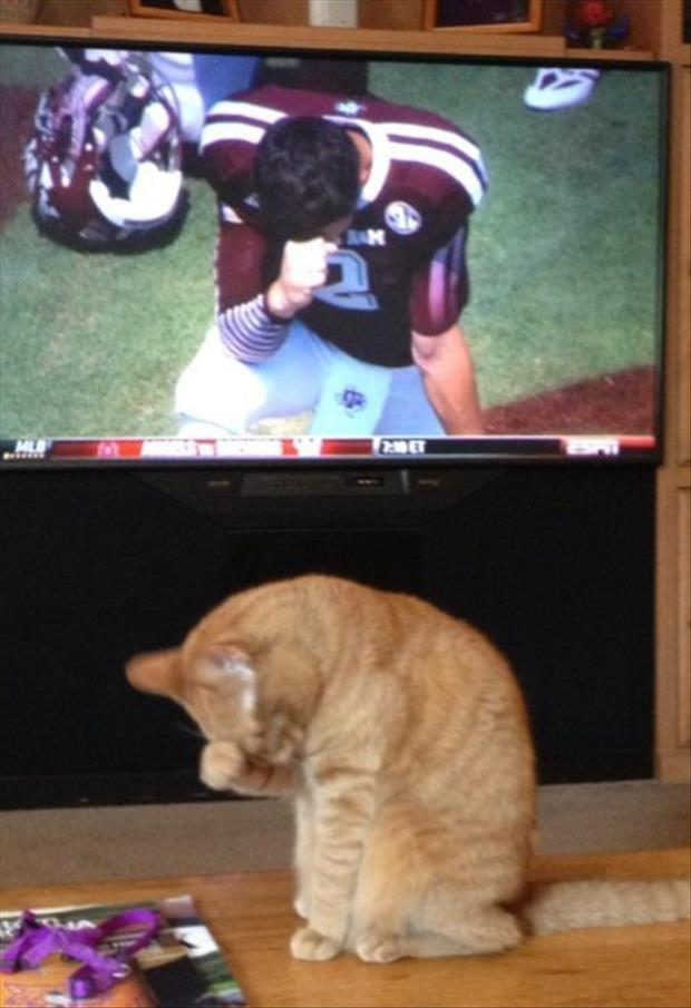 cat does tebow